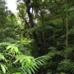 Consultoría en Medio Ambiente Guatemala