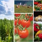 Normas ISO 14000 Agroindustria Guatemala ISO 14001 para el sector agroindustrial en Guatemala